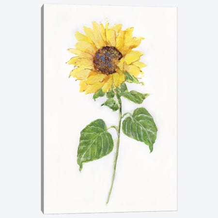 Sunflower II Canvas Print #SWA259} by Sally Swatland Canvas Artwork
