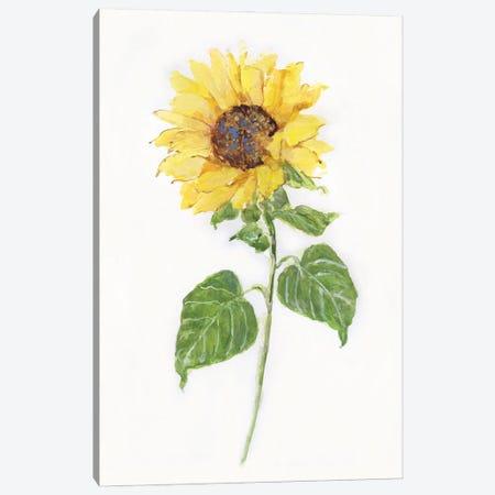 Sunflower II Canvas Print #SWA259} by Sally Swatland Canvas Artwork