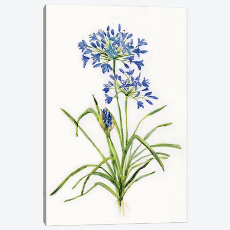 Blue Lively Botanical I Canvas Print #SWA269} by Sally Swatland Canvas Print