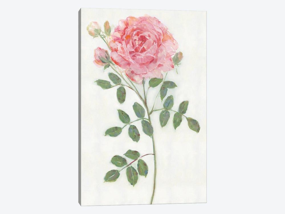 Single Stem II by Sally Swatland 1-piece Canvas Print