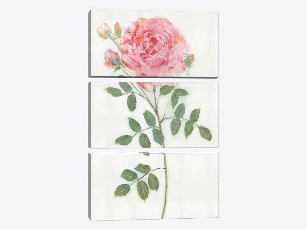 Single Stem II by Sally Swatland 3-piece Canvas Art Print