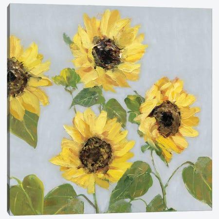 Sunflower Array I Canvas Print #SWA294} by Sally Swatland Art Print