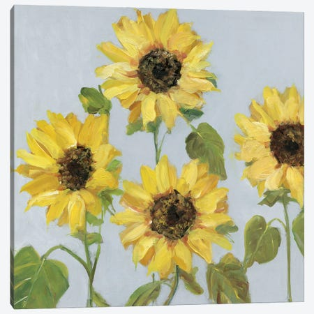 Sunflower Array II Canvas Print #SWA295} by Sally Swatland Art Print