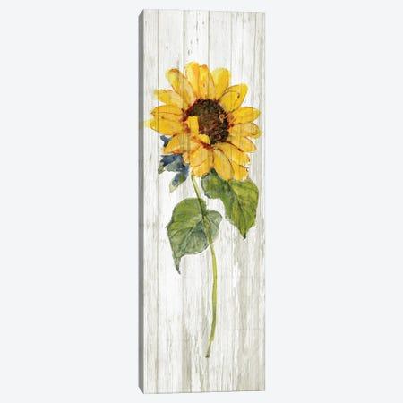 Sunflower in Autumn I Canvas Print #SWA296} by Sally Swatland Canvas Print