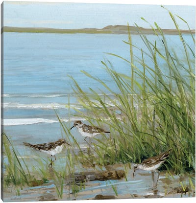 Afternoon On The Shore III Canvas Art Print