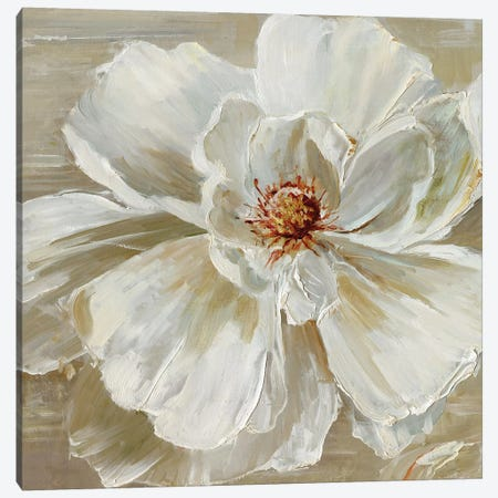 Bloomin' Beauty I Canvas Print #SWA6} by Sally Swatland Art Print