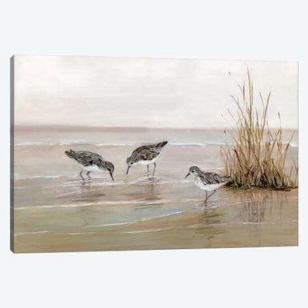 Early Risers II Canvas Print #SWA73} by Sally Swatland Canvas Art Print
