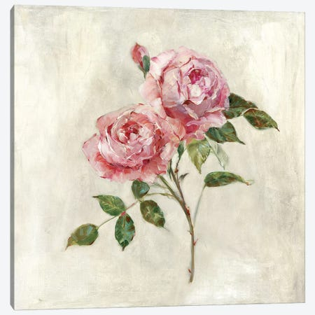 Botanical Beauties I Canvas Print #SWA92} by Sally Swatland Canvas Print