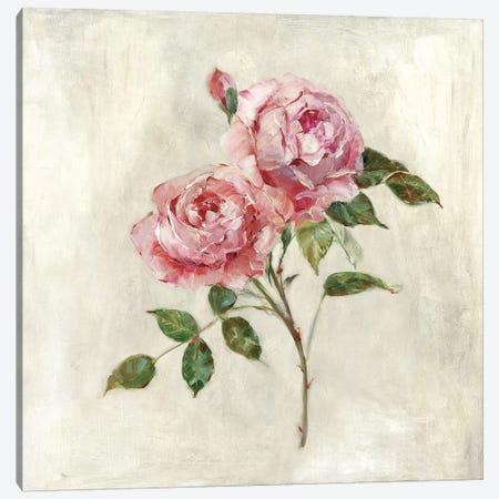 Botanical Beauties I Canvas Print #SWA92} by Sally Swatland Canvas Print