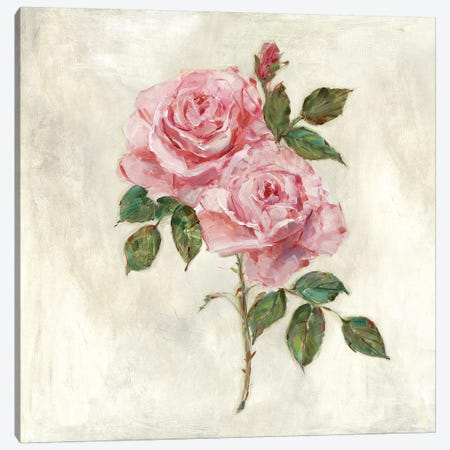 Botanical Beauties II Canvas Print #SWA93} by Sally Swatland Canvas Art Print