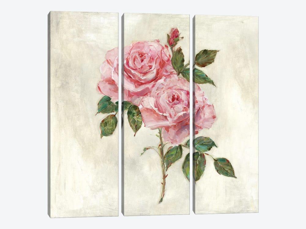 Botanical Beauties II by Sally Swatland 3-piece Canvas Print