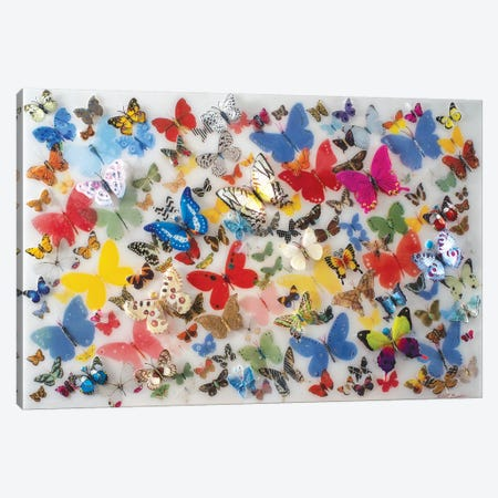 Papillon IV Canvas Print #SWD90} by Robert Swedroe Canvas Art