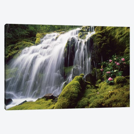 Waterfall and wild rhododendrons, Oregon. Canvas Print #SWE105} by Stuart Westmorland Canvas Wall Art