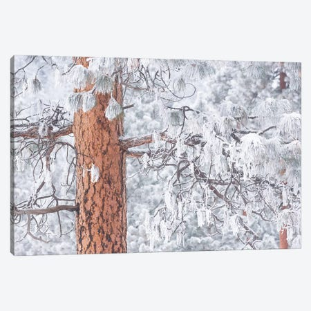 Wind-blown frosted snow on trees, Mt. Hood National Forest, Oregon Canvas Print #SWE107} by Stuart Westmorland Canvas Artwork