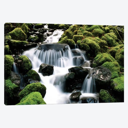 Cascading Mossy Stream, Sol Duc River Valley, Olympic National Park, Washington, USA Canvas Print #SWE12} by Stuart Westmorland Canvas Art Print