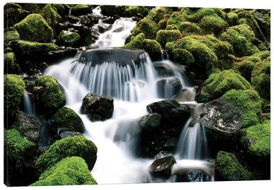 Cascading Mossy Stream, Sol Duc River Valley, Olympic National Park, Washington, USA Canvas Art Print