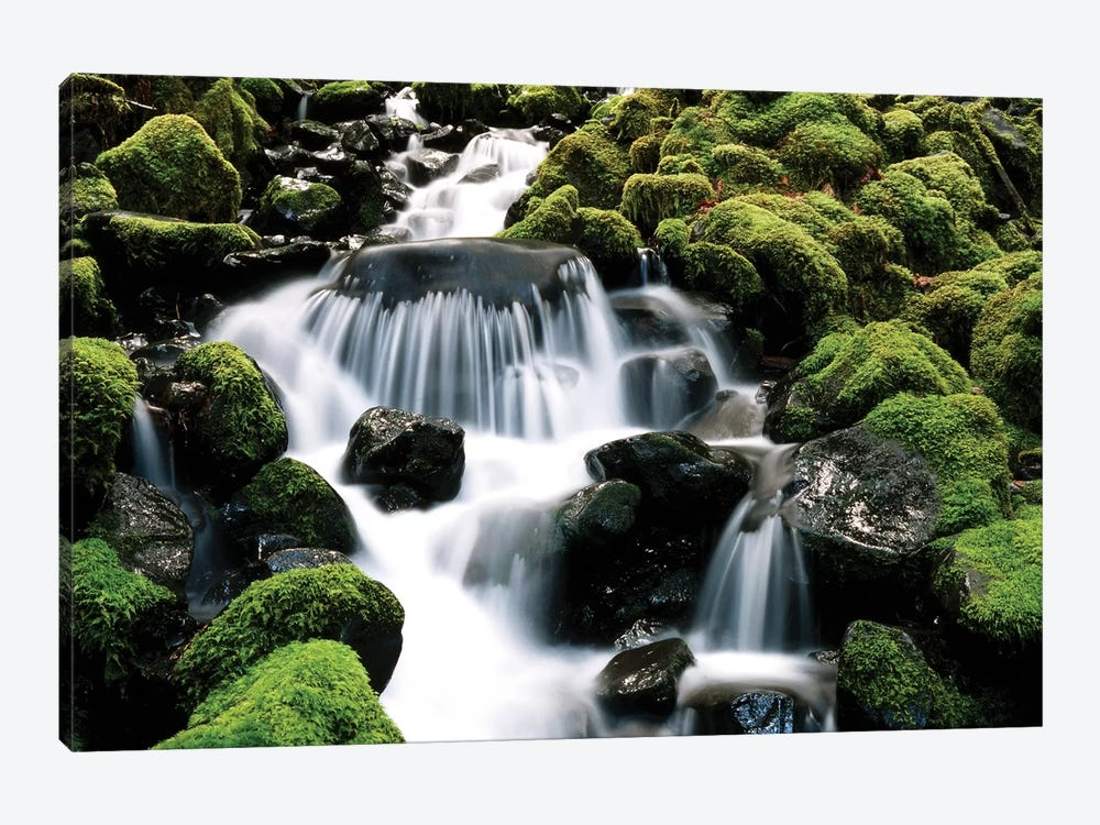Cascading Mossy Stream, Sol Duc River Valley, Olympic National Park, Washington, USA by Stuart Westmorland 1-piece Canvas Art Print