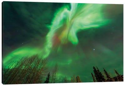 Aurora borealis, near Fairbanks, Alaska Canvas Art Print