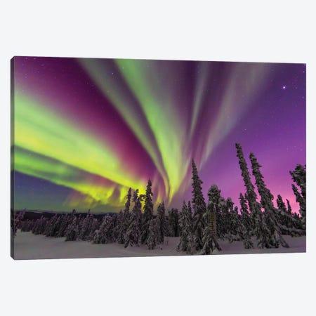 Aurora borealis, northern lights, near Fairbanks, Alaska II Canvas Print #SWE16} by Stuart Westmorland Canvas Wall Art