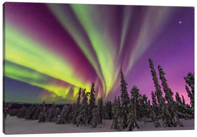 Aurora borealis, northern lights, near Fairbanks, Alaska II Canvas Art Print