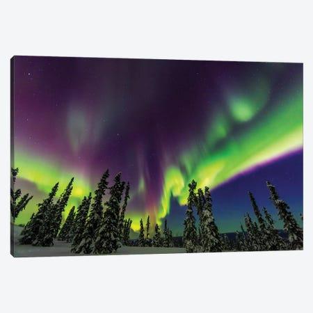 Aurora borealis, northern lights, near Fairbanks, Alaska III Canvas Print #SWE17} by Stuart Westmorland Canvas Artwork