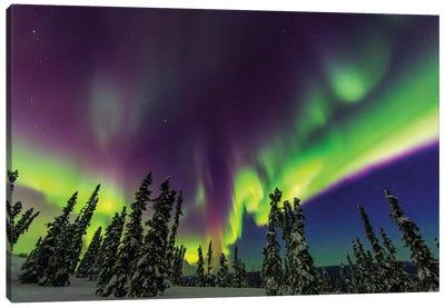 Aurora borealis, northern lights, near Fairbanks, Alaska III Canvas Art Print