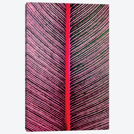 Pink-Striped Heliconia, Heliconia iconia, HTBG, Hawaii Canvas Print #SWE25} by Stuart Westmorland Canvas Art Print