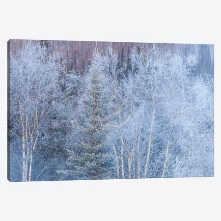 Winter scenic near Fairbanks, Alaska Canvas Print #SWE28} by Stuart Westmorland Canvas Wall Art