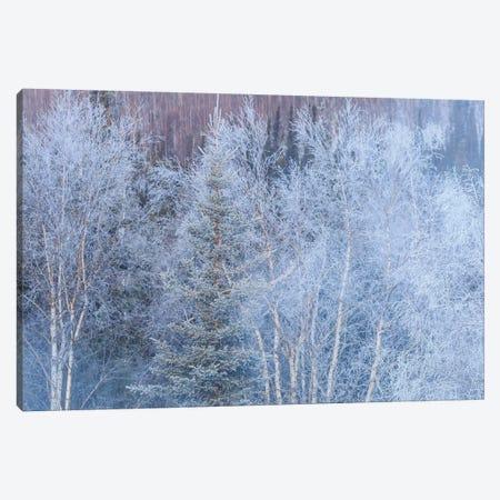Winter scenic near Fairbanks, Alaska Canvas Print #SWE28} by Stuart Westmorland Canvas Wall Art