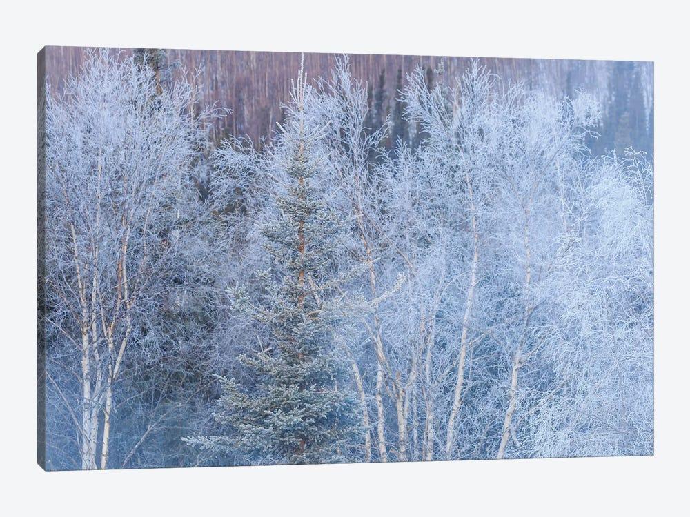 Winter scenic near Fairbanks, Alaska by Stuart Westmorland 1-piece Canvas Art
