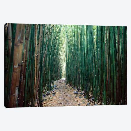 Bamboo Forest, Haleakala National Park, Maui Canvas Print #SWE33} by Stuart Westmorland Canvas Art Print