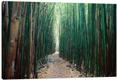 Bamboo Forest, Haleakala National Park, Maui Canvas Art Print