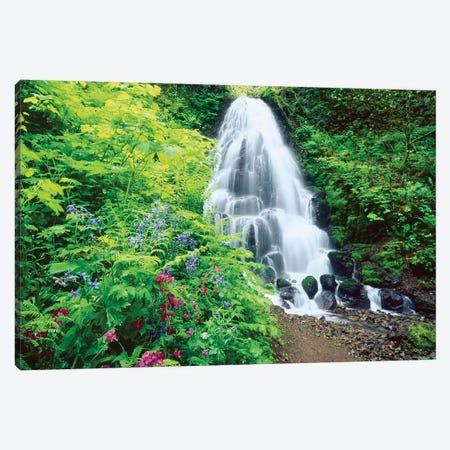 Fairy Falls, wildflowers, Columbia Gorge, Oregon Canvas Print #SWE40} by Stuart Westmorland Canvas Artwork