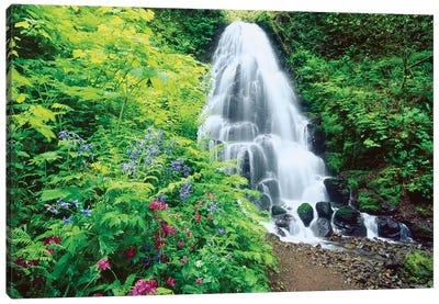 Fairy Falls, wildflowers, Columbia Gorge, Oregon Canvas Art Print