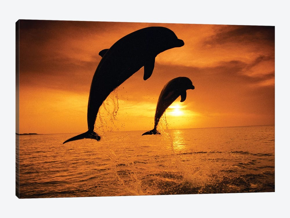 Jumping Bottlenose Dolphins by Stuart Westmorland 1-piece Canvas Artwork