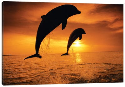 Jumping Bottlenose Dolphins Canvas Art Print