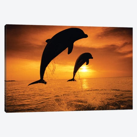 Jumping Bottlenose Dolphins Canvas Print #SWE4} by Stuart Westmorland Art Print
