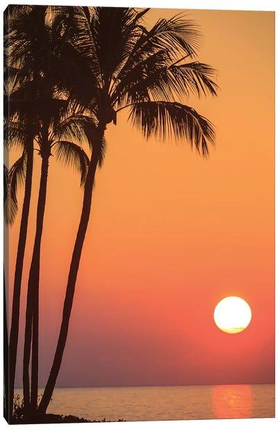 Maui, Hawaii, USA. Palm trees in the sunset. Canvas Art Print