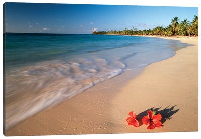 Hibiscus On Tabyana Beach, Roatan (The Big Island), Bay Islands, Honduras Canvas Art Print