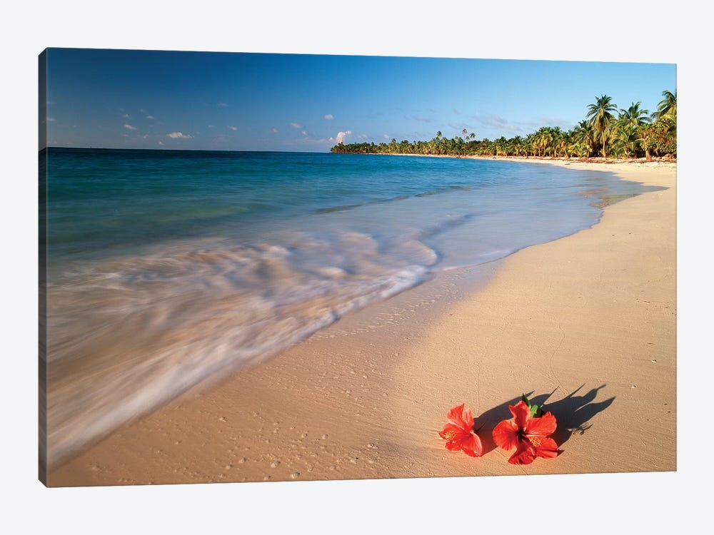 Hibiscus On Tabyana Beach, Roatan (The Big Island), Bay Islands, Honduras 1-piece Canvas Art Print