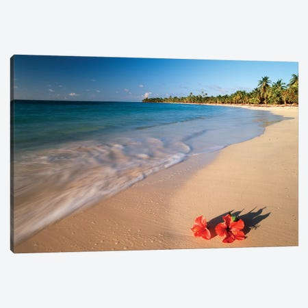 Hibiscus On Tabyana Beach, Roatan (The Big Island), Bay Islands, Honduras Canvas Print #SWE5} by Stuart Westmorland Canvas Art Print