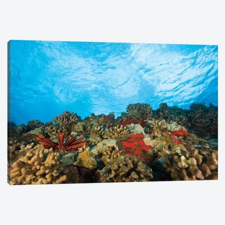 Scuba Diving at Molokini Crater, Maui, Hawaii, USA Canvas Print #SWE65} by Stuart Westmorland Canvas Art Print