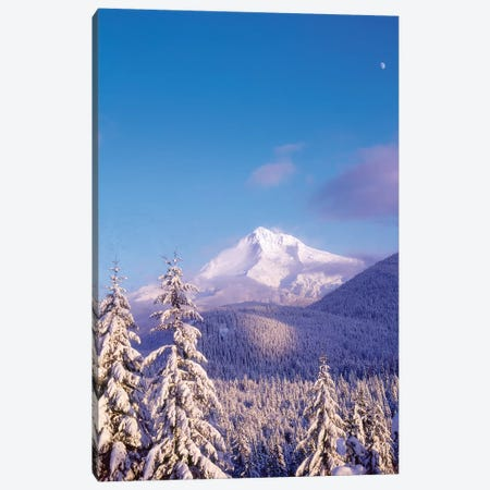 Snow-covered trees, Mt. Hood (highest point in Oregon), Mt. Hood National Forest, Oregon Canvas Print #SWE70} by Stuart Westmorland Canvas Art Print