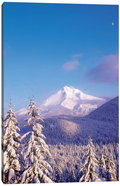 Snow-covered trees, Mt. Hood (highest point in Oregon), Mt. Hood National Forest, Oregon Canvas Art Print