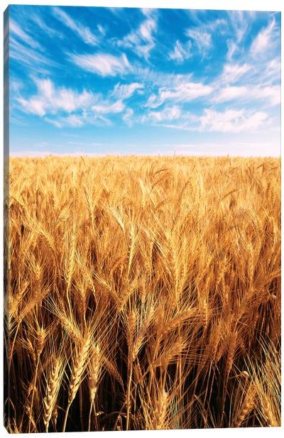Clouds Over A Wheat Field, Oregon, USA Canvas Art Print