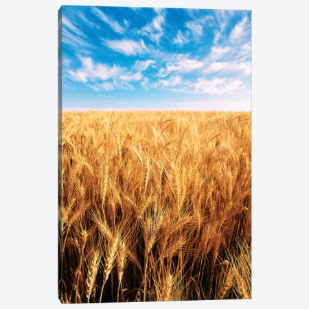 Clouds Over A Wheat Field, Oregon, USA Canvas Print #SWE7} by Stuart Westmorland Canvas Print