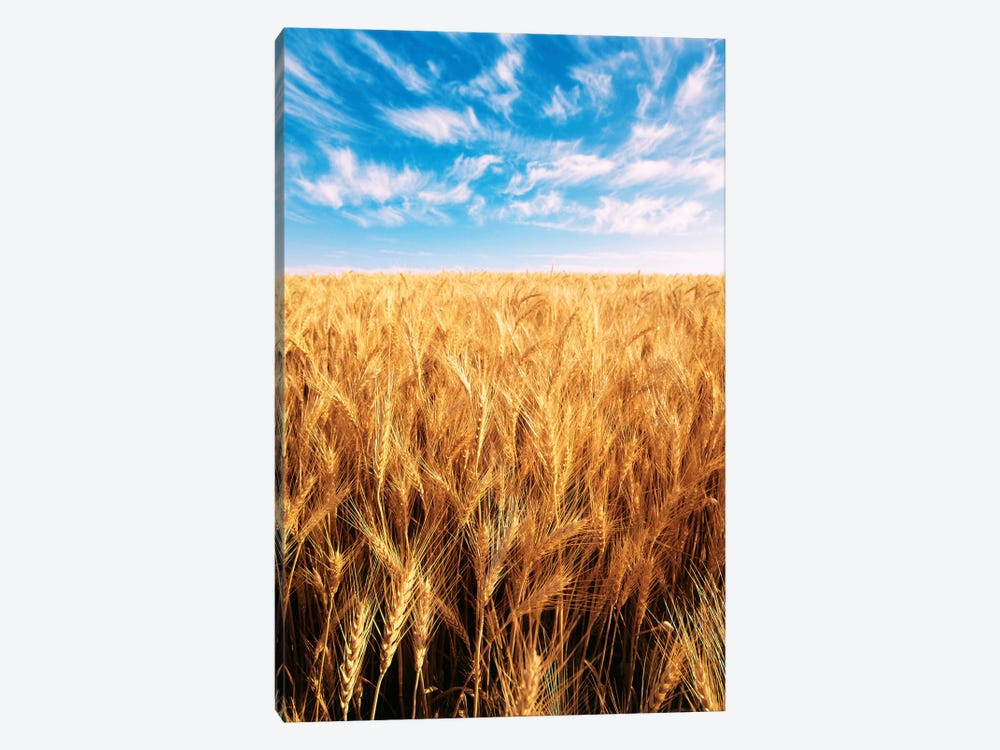 Clouds Over A Wheat Field, Oregon, USA by Stuart Westmorland 1-piece Art Print