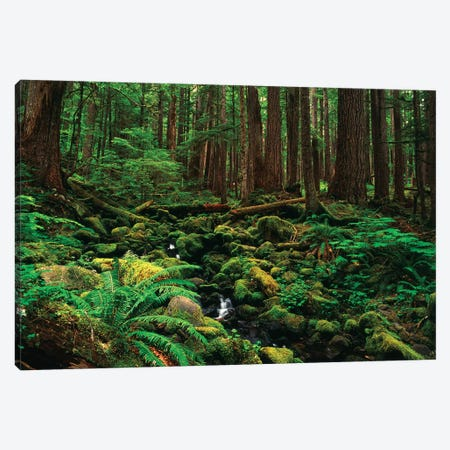 Creek In An Old Growth Forest, Olympic National Park, Washington, USA Canvas Print #SWE8} by Stuart Westmorland Canvas Artwork