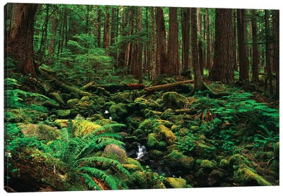 Creek In An Old Growth Forest, Olympic National Park, Washington, USA Canvas Art Print