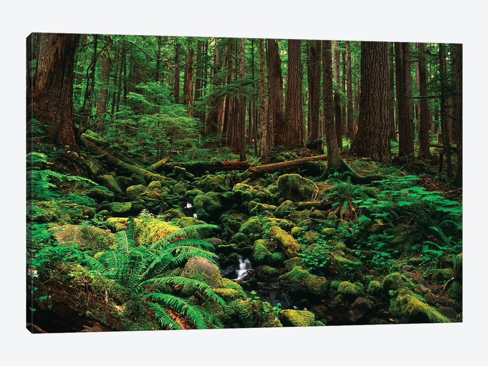 Creek In An Old Growth Forest, Olympic National Park, Washington, USA by Stuart Westmorland 1-piece Canvas Art